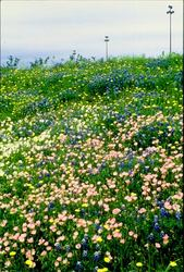 Dallas Ft. Worth Airport Wildflower Works