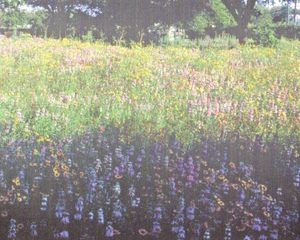 Dallas Museum of Natural History - Wildflower Works a